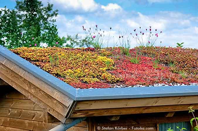 Dachbegrunung Auf Ihrem Gartenhaus So Geht S