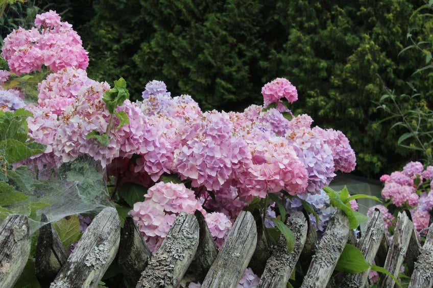 Blumen und ihre Bedeutung: Das Hanakotoba-Lexikon